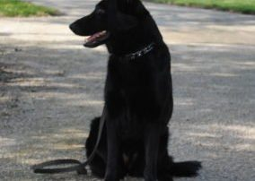 Axel Family Protection Dog