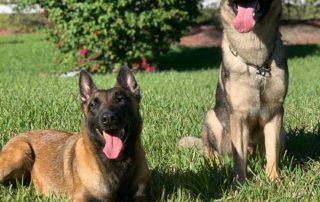 Slash Family Protection Dog