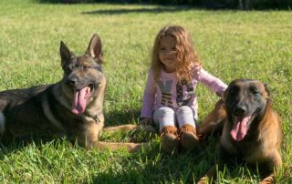 Kid Safe Family Protection Dogs