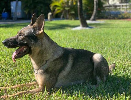 How a Former Navy Seal Turns an Attack Dog Into Your $100,000 New Best Friend