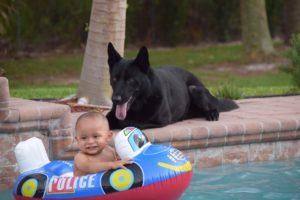 Ninja Family Protection Dog