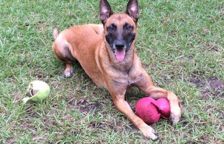Riddick Family Protection Dog