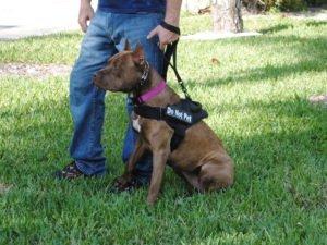Zora Family Protection Dog
