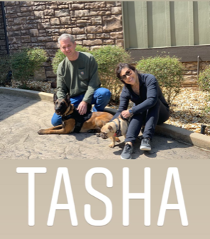 Tasha Family Protection Dog