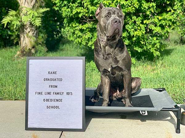 Kane Board and Training Dog