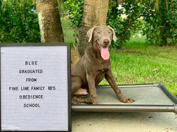 Blue Board and Train Graduate