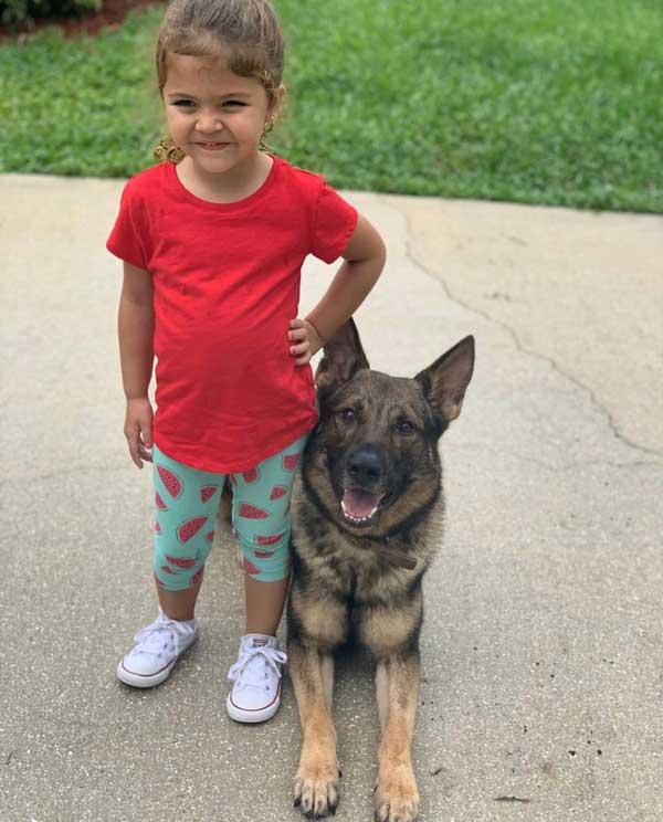Tantrum German Shepherd Protection Dog
