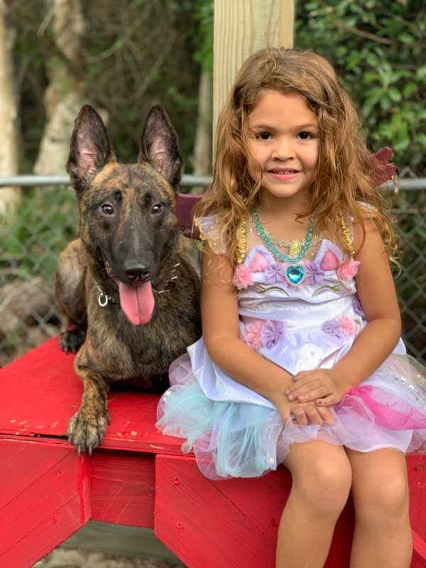Rat Dutch Shepherd Protection Dog