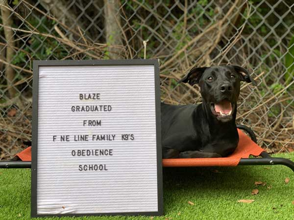 Blaze Dog Training Graduate