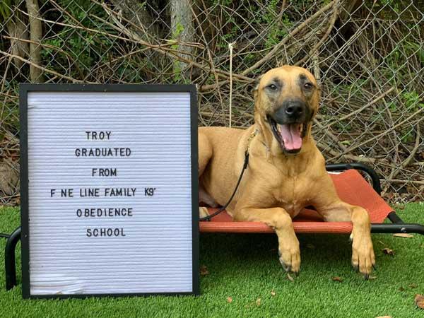 Troy Dog Training Graduate