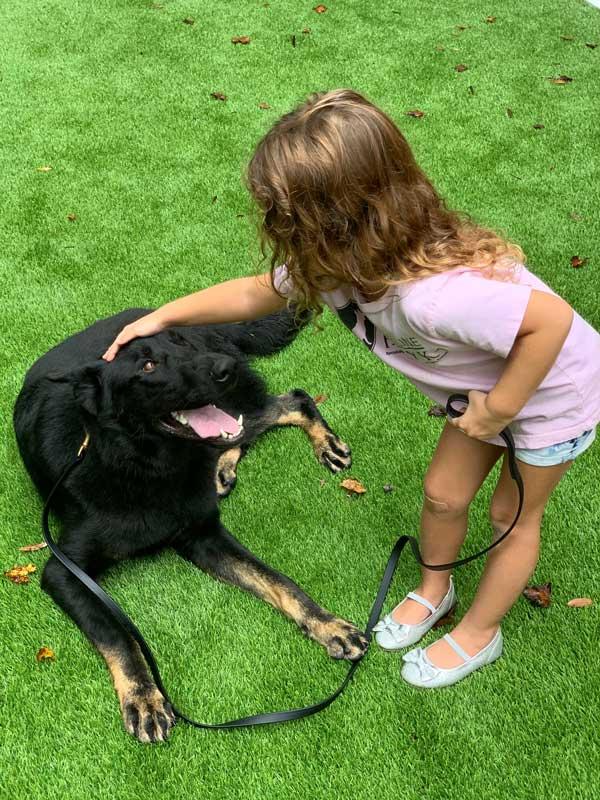 Zar German Shepherd Protection Dog