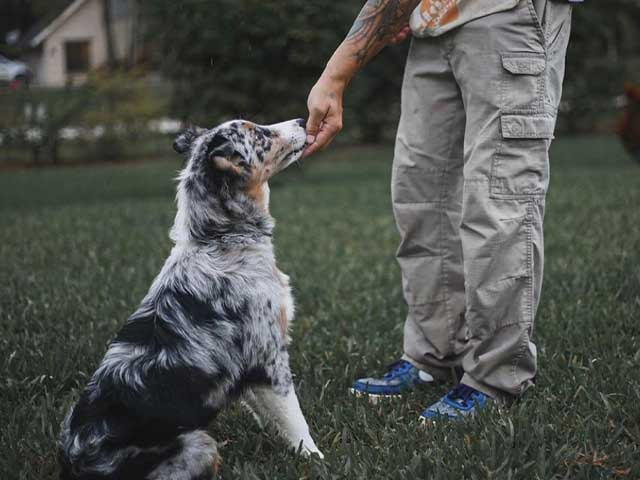 Dog Training Programs