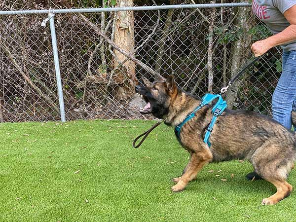 Doom Protection Dog