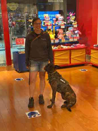 Bram - Family Protection Dog