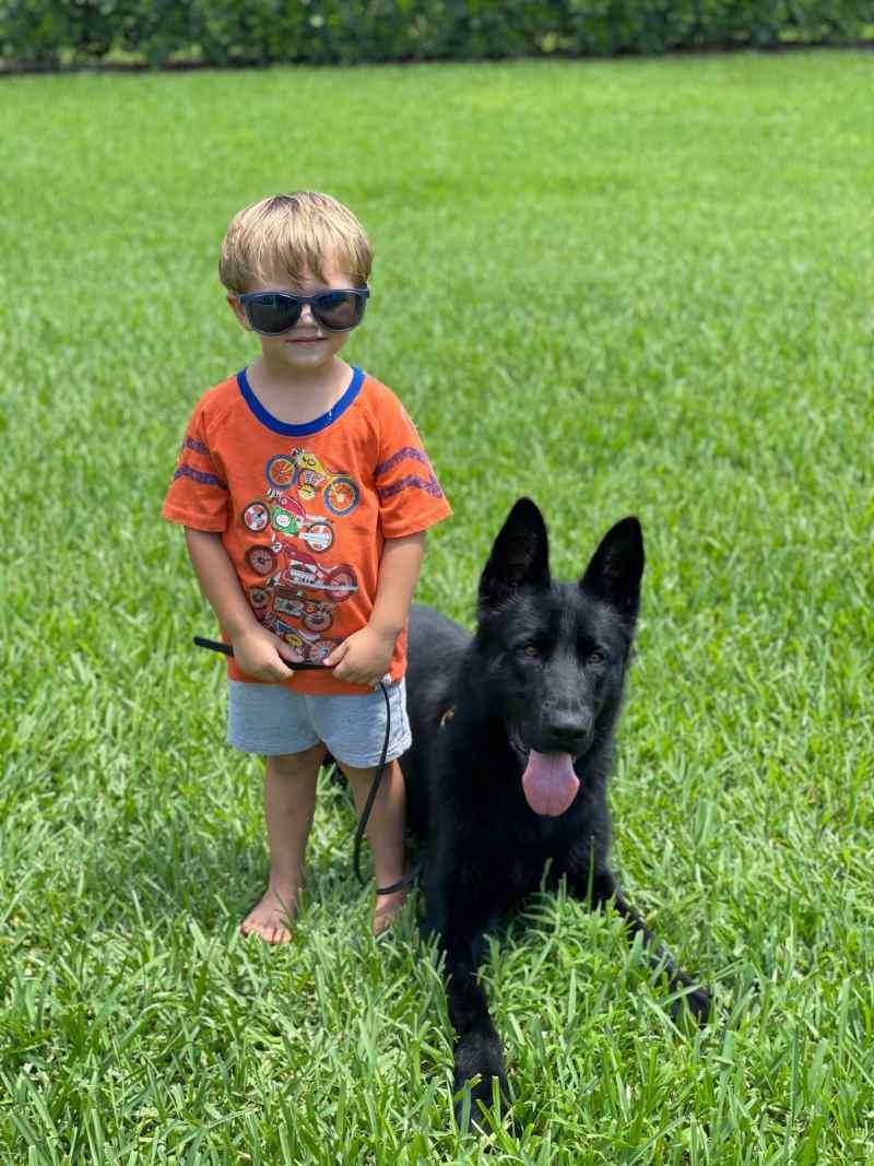 Capone - Family Protection German Shepherd