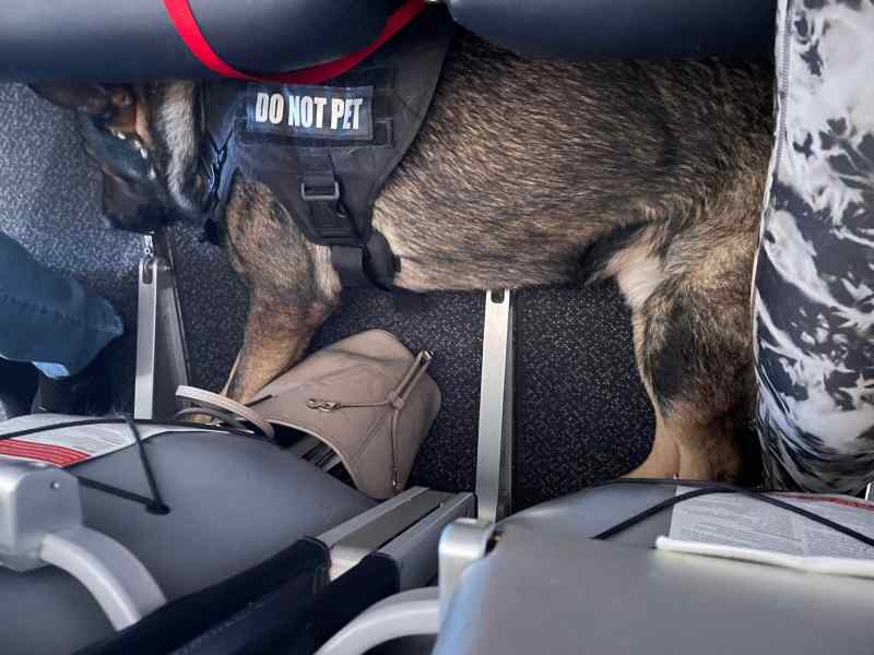 Andy - Family Protection German Shepherd